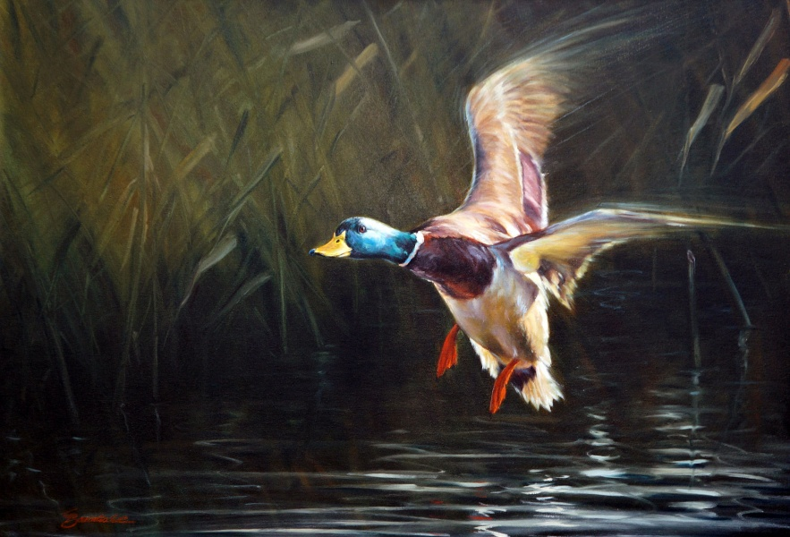Wildlife | Gallery-B Georg Baumhakl
